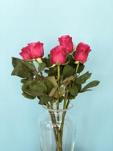 Роза сорт Такази